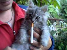 http://tupik2005.narod.ru/cat/cat_3/7.jpg